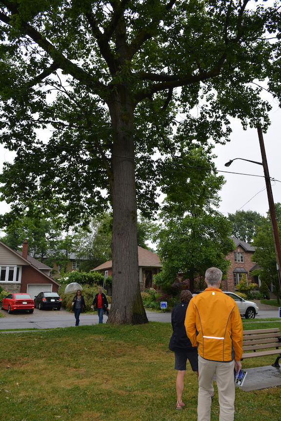 Big Red is a 200-year-old red oak that was the first Heritage tree in Long Branch